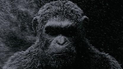 Обзор фильма «Планета обезьян: Война». Основной скромный инстинкт