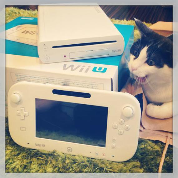Развлекательный канал: котики и видеоигры!