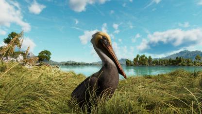 Гайд: Как покормить пеликанов в Far Cry6