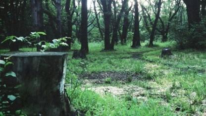 Справится ли режиссер Pacific Rim с Silent Hills?