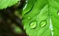 Зеленый лагерь. Высокие технологии на защите окружающей среды