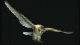 Наследники совы