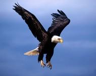 Что за птица? 10 странных существ