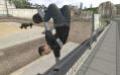 Краткие обзоры. Tony Hawk's Pro Skater 4