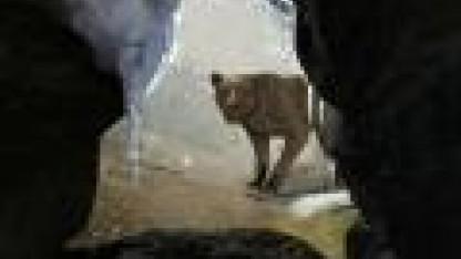 ECHO: Secrets of Lost Cavern