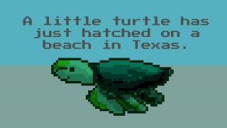 A little turtle has just hatched on a beach in Texas. (itch)