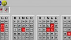 Expert Bingo