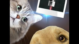 Laser for Home Animal Joke