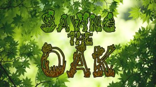 Saving the Oak (itch)