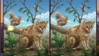 World Riddles: Animals