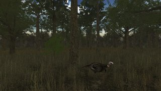 Wild Turkey Hunter VR