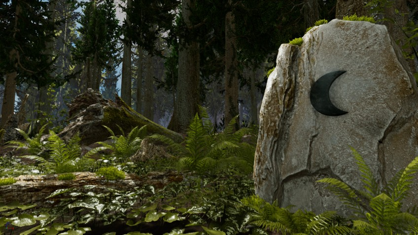 Shinrin-yoku: Forest Meditation and Relaxation