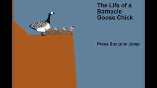 The Life of a Barnacle Goose Chick (itch)