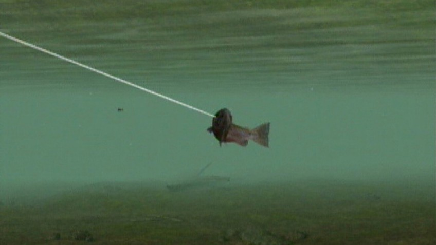 Reel Fishing Challenge 2