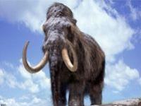Ученые воскресят мамонтов?