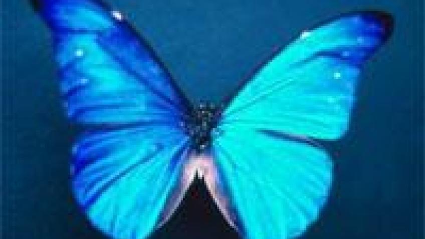 Бабочка помогла ученым