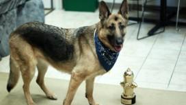 Псина из Fallout4 выиграла награду World Dog Award