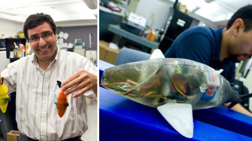 Роборыбку из MIT запустят в Мировой Океан