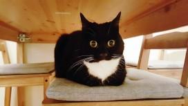 Нейросеть обучили создавать изображения несуществующих котов