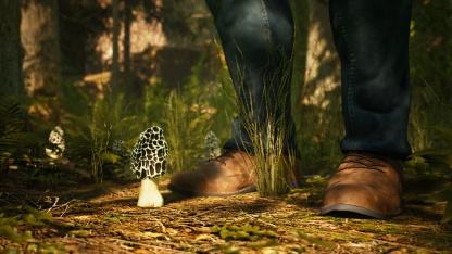 «Грибной» симулятор Morels: The Hunt вышел в Steam