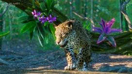 Ламы, ягуары, муравьеды и другие: для Planet Zoo готовят расширение South America Pack
