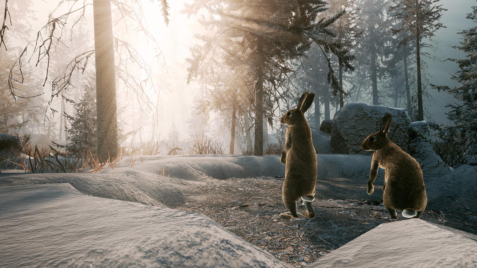Авторы Winter Survival Simulator задали игрокам17 простых вопросов