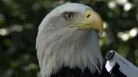 Ubisoft показала Лондон с высоты птичьего полета в рекламе Assassin's Creed: Syndicate