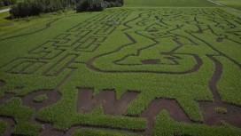 В рекламных целях Anthem BioWare перепахала кукурузное поле