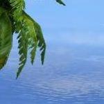 Первая DirectX 10 игра
