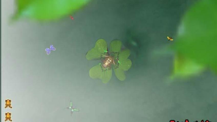 Спасем золотых лягушек
