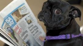 Watch_Dogs остается самой популярной игрой в Великоритании