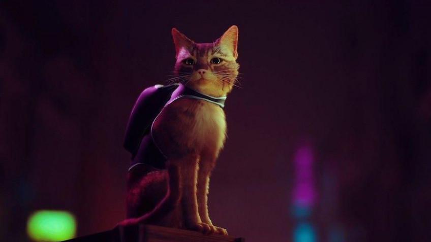 Игра про бродячего кота в киберпанковом городе Stray выйдет в 2021 году