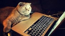 «Железному цеху» нужны люди: Игромания ищет автора новостей