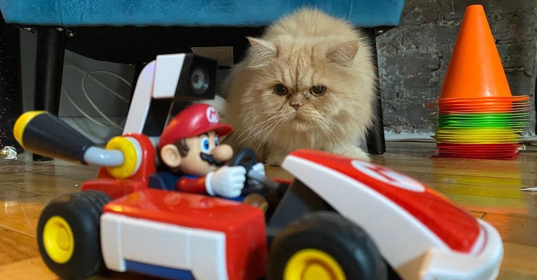 Коты не рады релизу Mario Kart Live: Home Circuit
