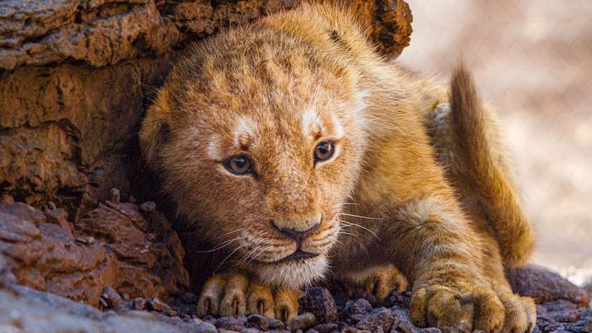 Disney взыскала штраф с начальной школы за показ «Короля льва»