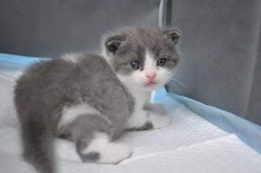 В Китае впервые клонировали кота