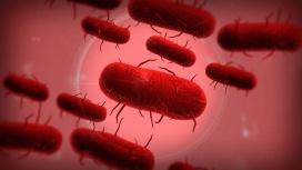 Симулятор эпидемии Plague Inc. забанили в Китае