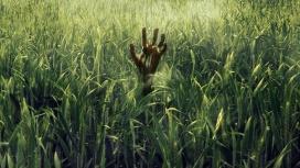 Вдоль рядов кукурузы: вышел трейлер экранизации «В высокой траве»