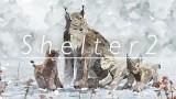 Shelter2 Трейнер + 4