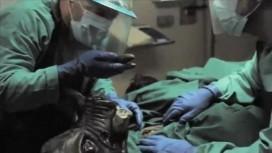 Duke Nukem Forever - Victim Autopsy Trailer