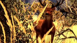 Cabela's Big Game Hunter 2010 - Trailer